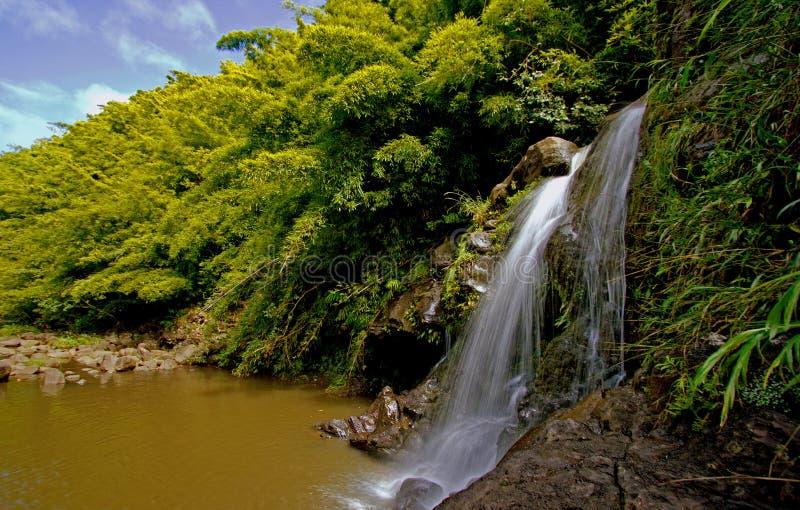 Bamboo waterfall stock photography