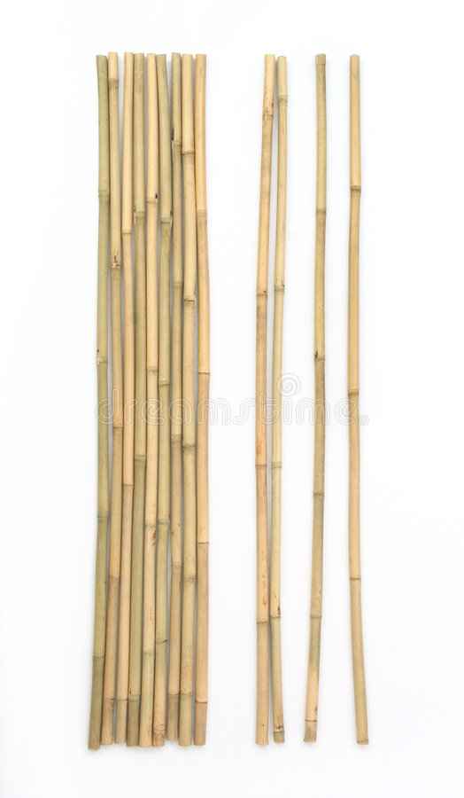 Download Bamboo on white background stock photo. Image of culture - 3018310