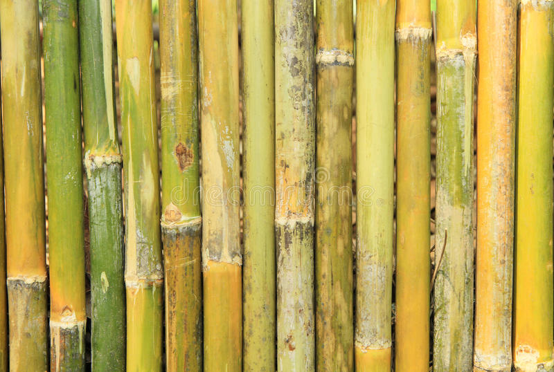 Bamboo wood background royalty free stock images