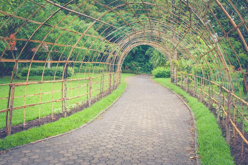 Bamboo wooden tunnel walkway or footpath in public park. stock photography