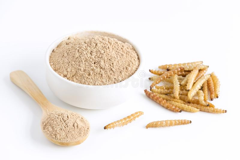 Bamboo worm powder. Bamboo Caterpillar flour for Insects eating as food edible items made of cooked insect meat in bowl and spoon. On white background is good stock image