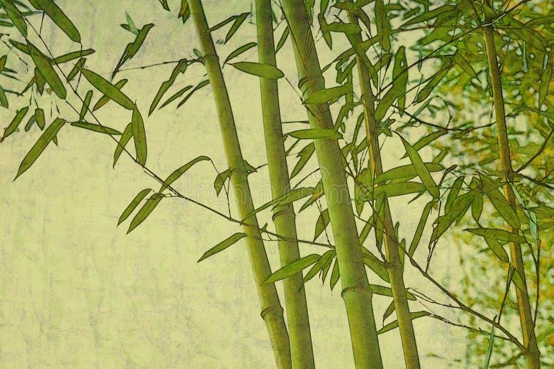 Bamboo zen textured natural background stock photos