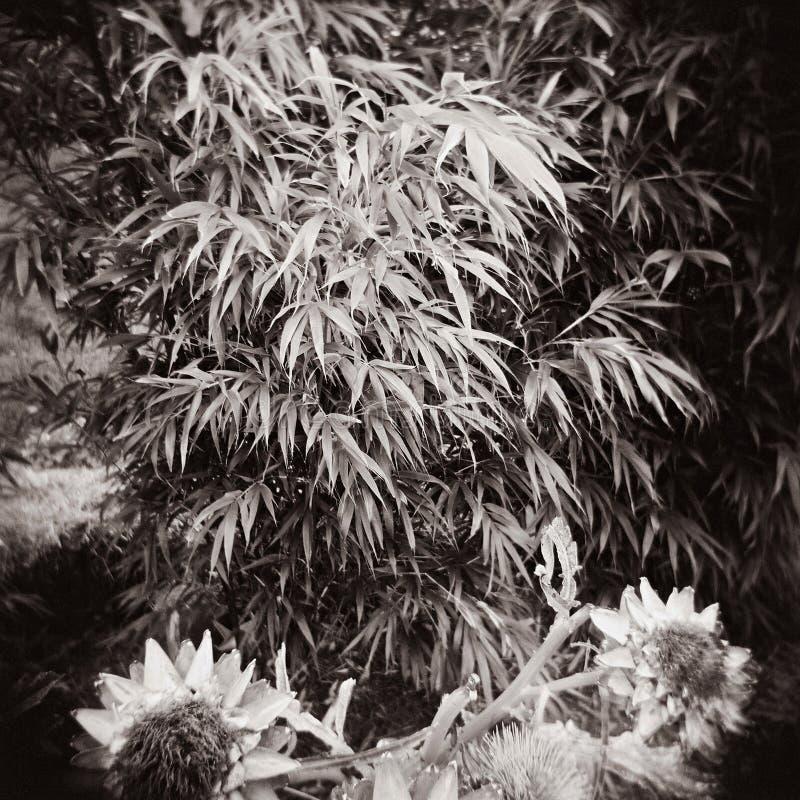 Bamboodplantor och solblommor royaltyfri bild
