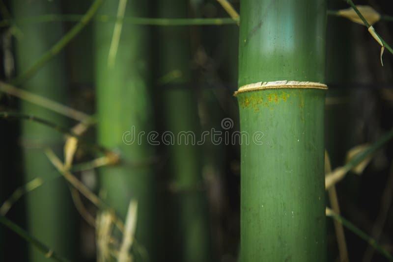 Bamboom ogród w parku z spokojną energią obraz royalty free
