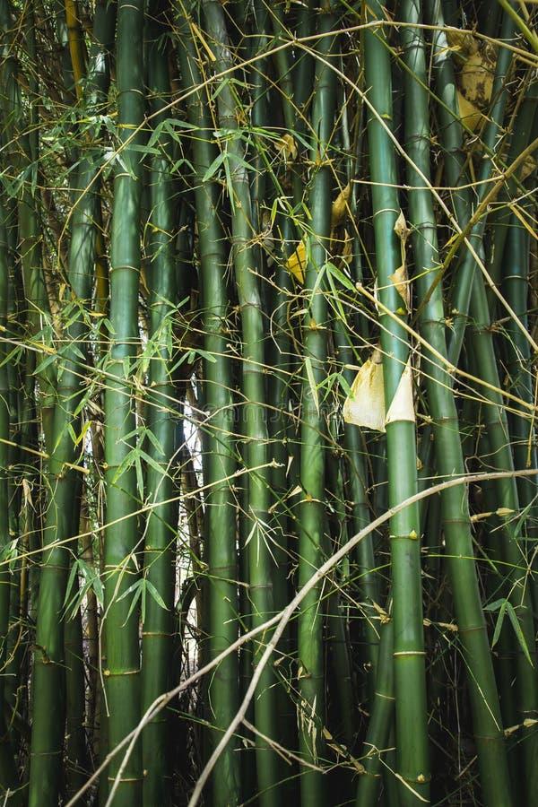 Bamboom ogród w parku z spokojną energią fotografia stock