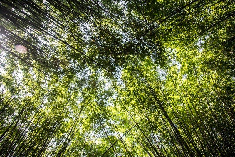 Bamboom ogród w parku z spokojną energią zdjęcie royalty free