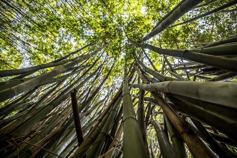 Bamboom ogród w parku z spokojną energią obrazy royalty free