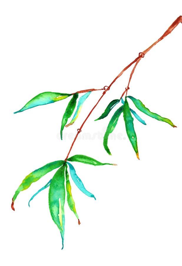 Bamboo Hanging Watercolor royalty free illustration
