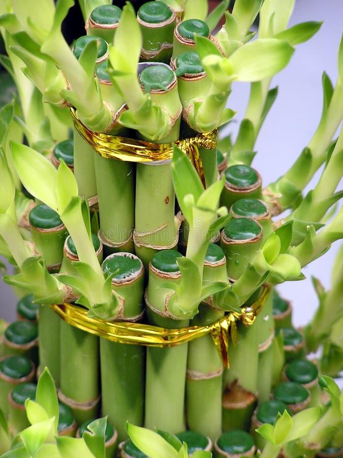 Bambou images libres de droits
