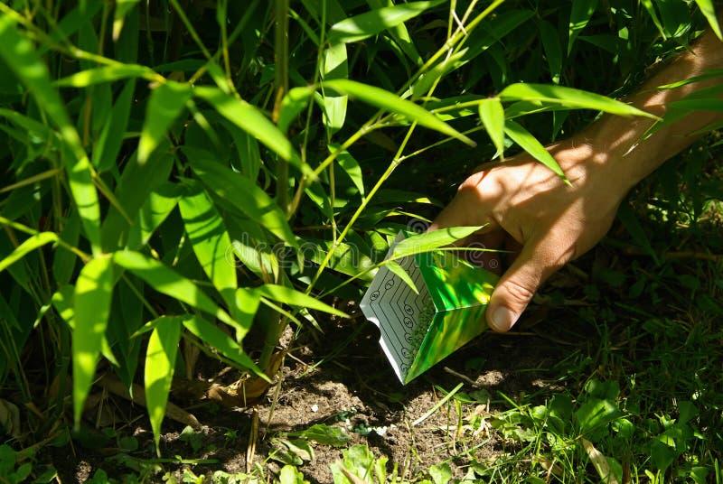 Bambou 17 photo libre de droits