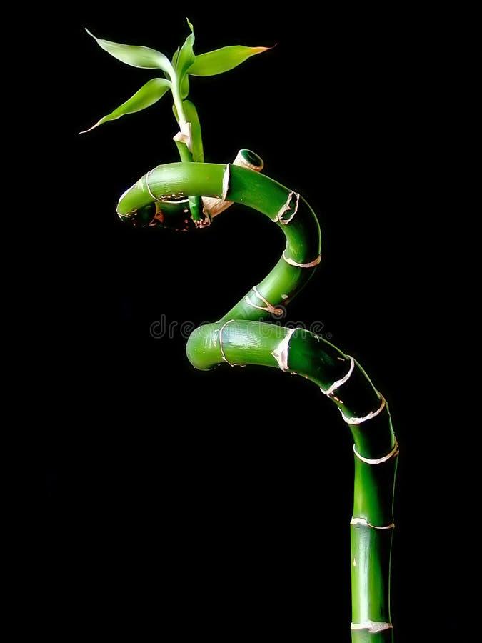 Download Bambou photo stock. Image du feuillage, bambou, jardin - 741434