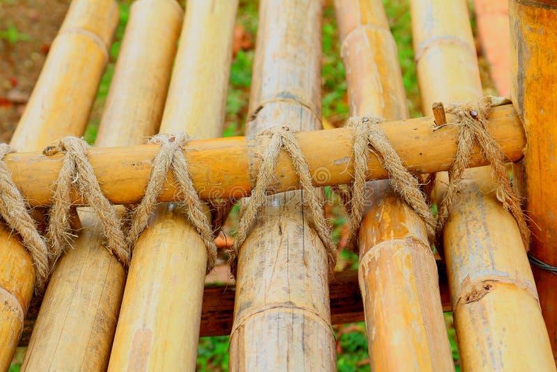 Bambou photos libres de droits