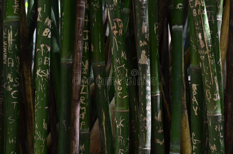 Bambou de graffiti image stock