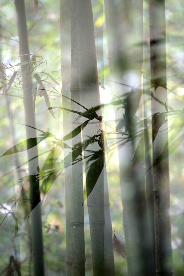 Bambou en rêvant photo libre de droits