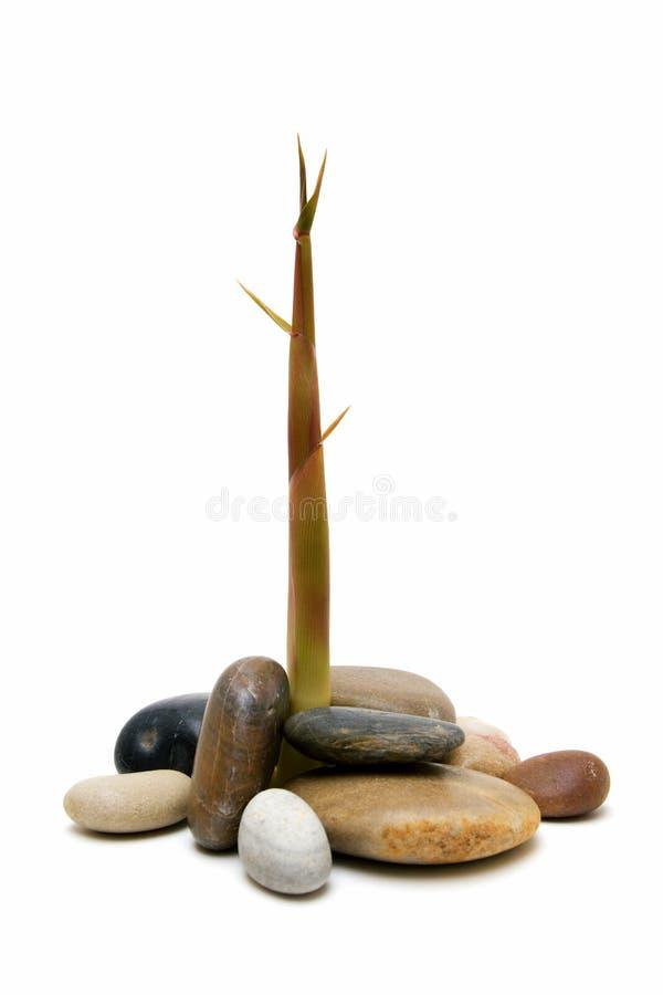 Bambou et pierres images stock