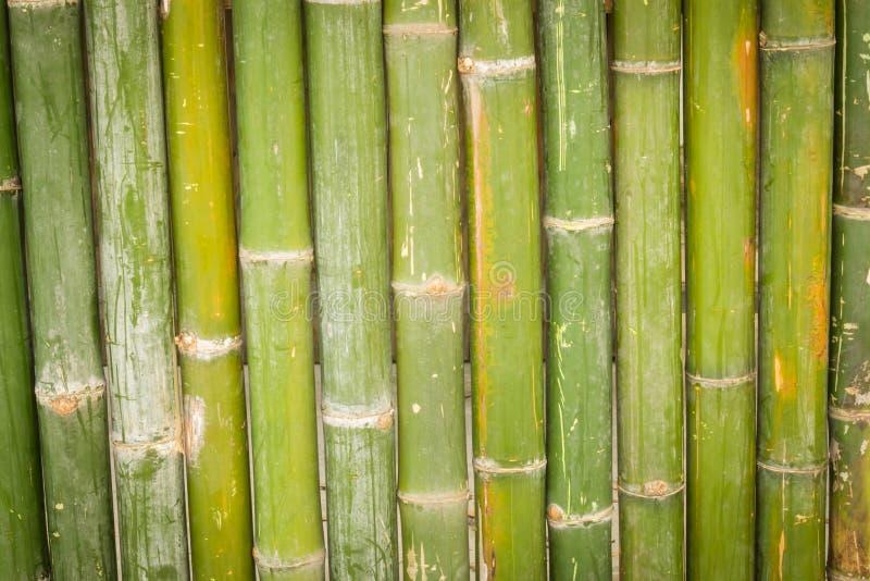 Bambou, fond en bambou photos libres de droits