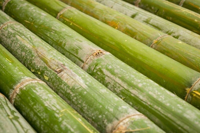 Bambou, fond en bambou photos stock