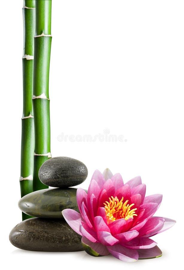 Bambou, pierres de station thermale et lotus photos libres de droits