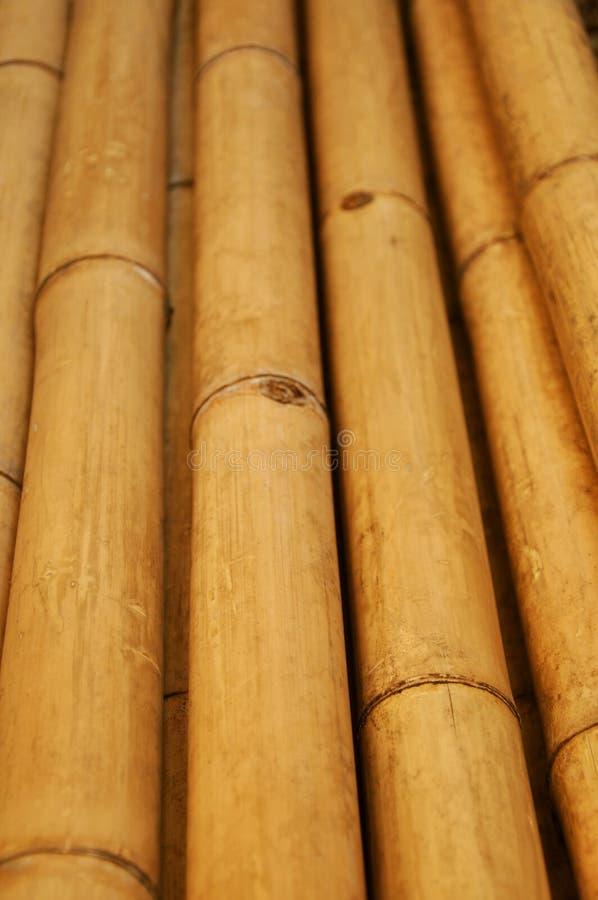 Bambou sec photo libre de droits
