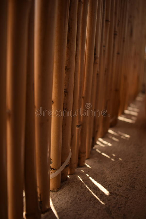 Bambou shadow stock photography