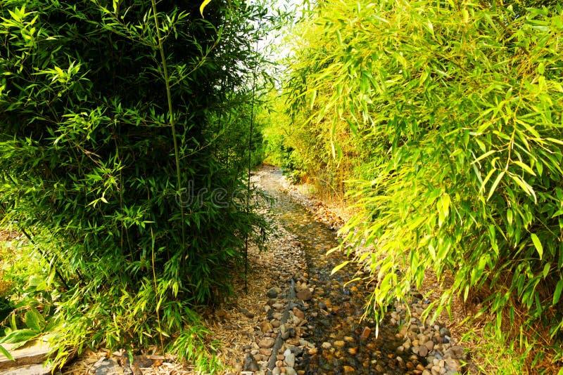 Bambou vert images stock
