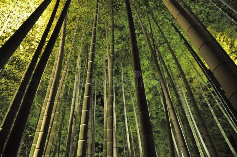 Bambou vert dans l'obscurité photos libres de droits