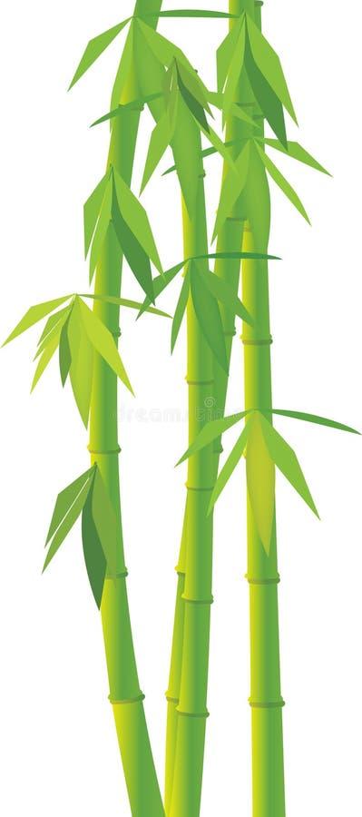 Bambou vert de vecteur