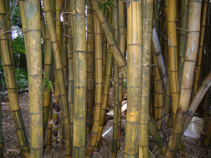 Bambous âgés pour faire l'artisanat images stock