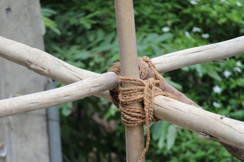 bambous image libre de droits