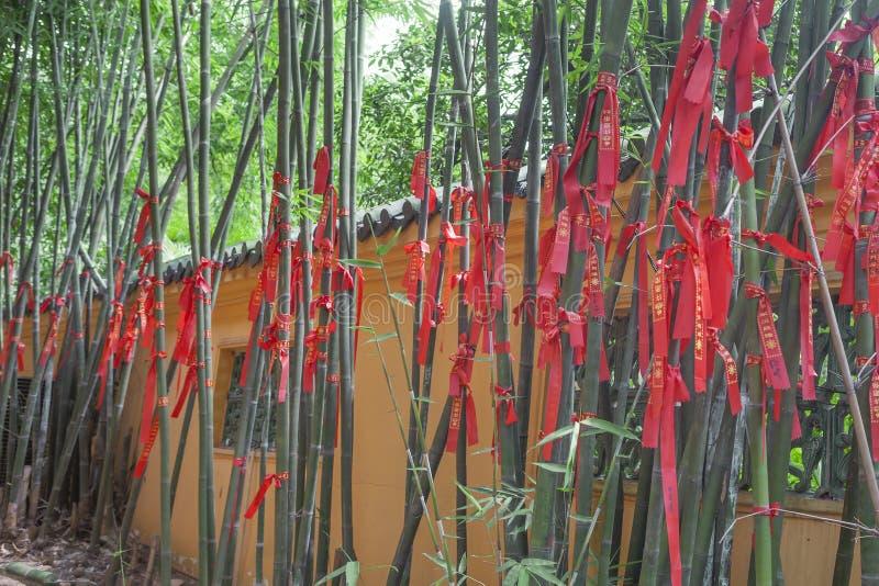 Bambous chanceux photos stock