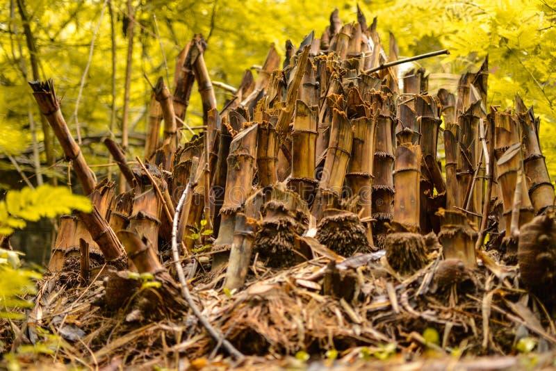 Bambous de Cutted photographie stock libre de droits