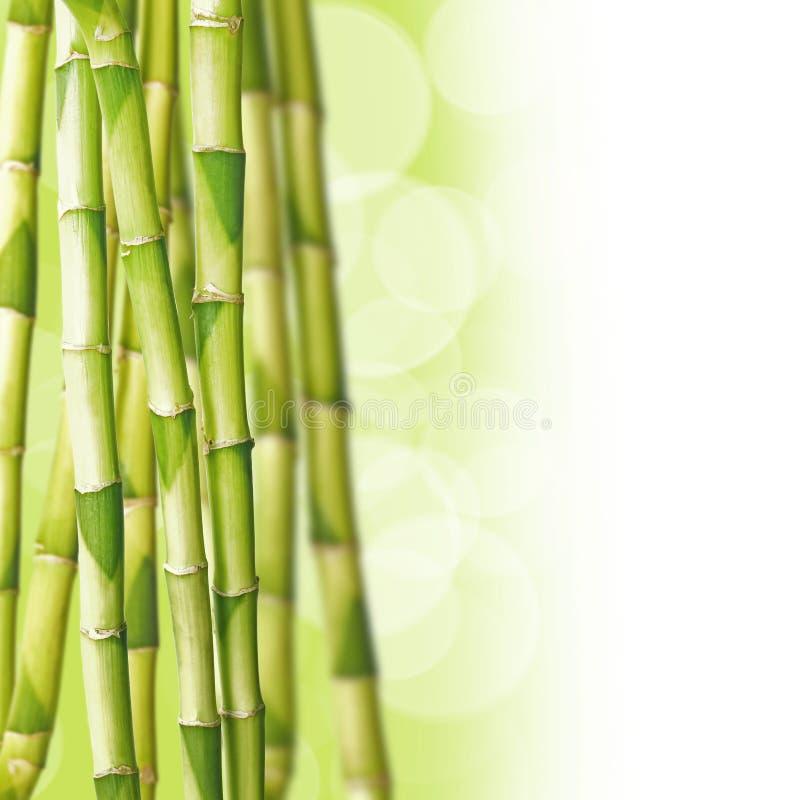 Bambous, fond vert photo libre de droits