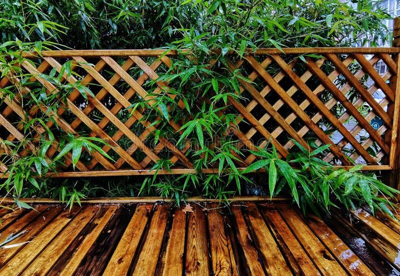 Bambous verts avec le fond en bois de rail photo libre de droits