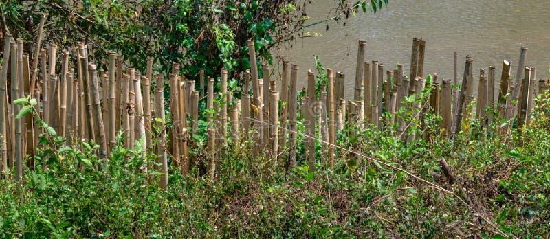 Bambu är van vid förhindrar jordskredet royaltyfri fotografi