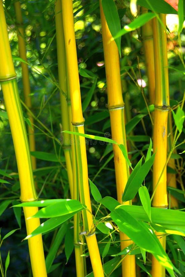 Bambu 03 fotos de stock royalty free