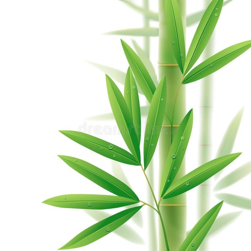Bambu ilustração stock