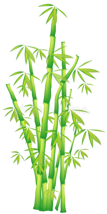 Bambu ilustração royalty free