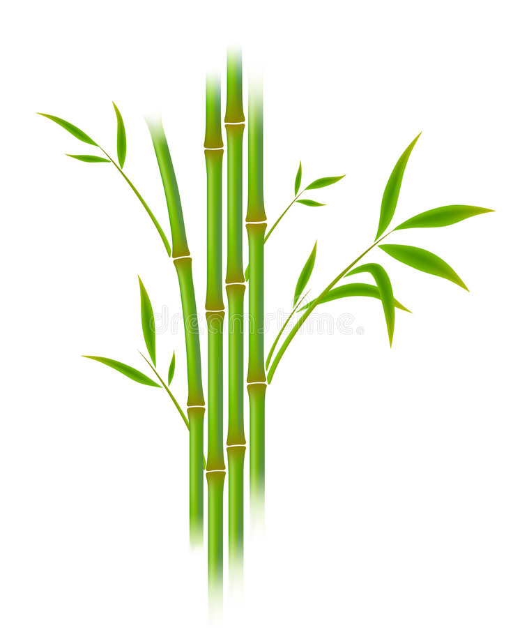 bambu stock illustrationer