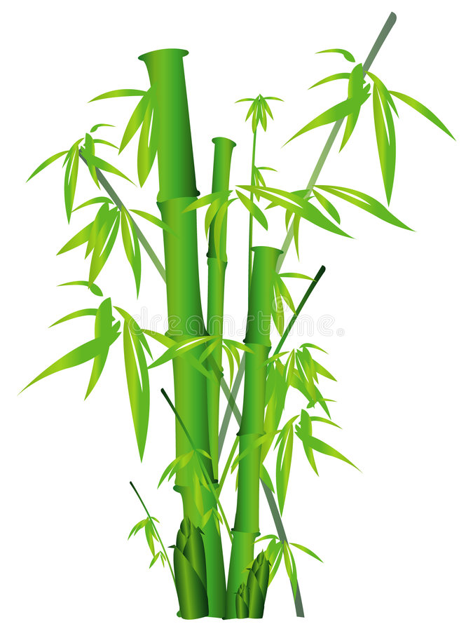 Bambu ilustração do vetor