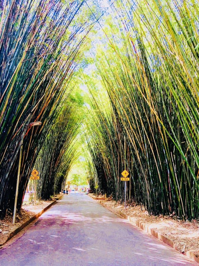Bambu fotografering för bildbyråer