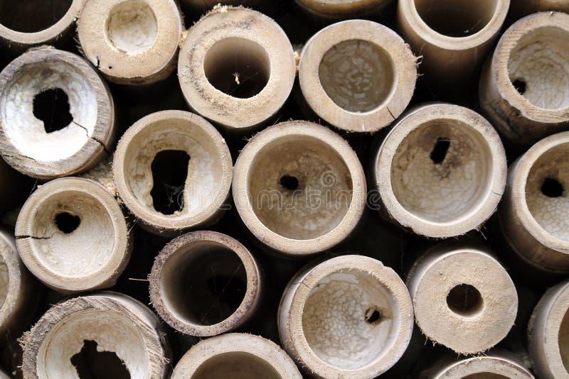 bambu cirklar detaljen arkivbild