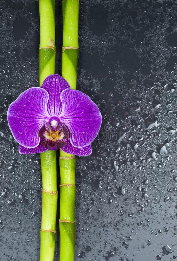 Bambu e orquídea no fundo preto imagens de stock