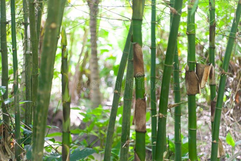 Bambu e plantas de bananas na vila do delta de Vietname Mekong foto de stock