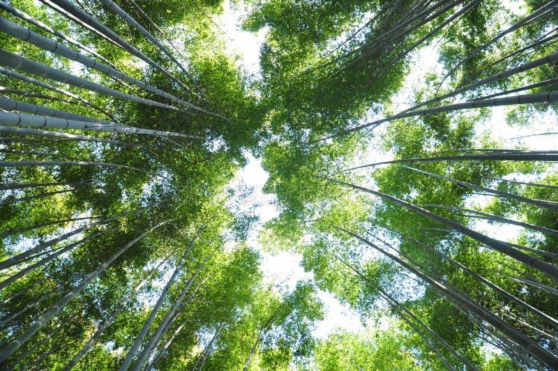 Bambu elevado fotos de stock royalty free