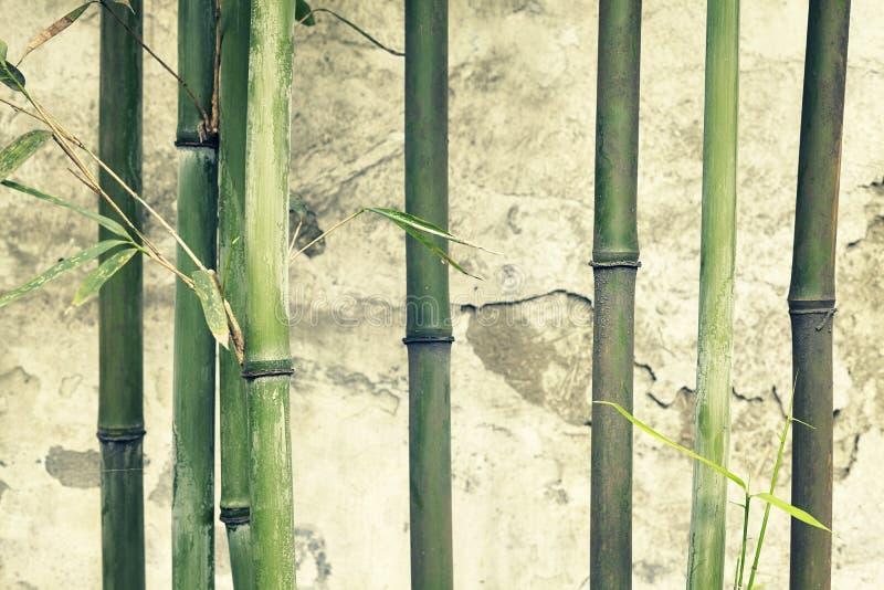 Bambu förgrena sig mot den gamla red ut väggen arkivfoton