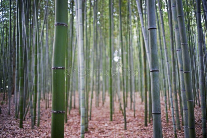 Bambu garden1 arkivbilder