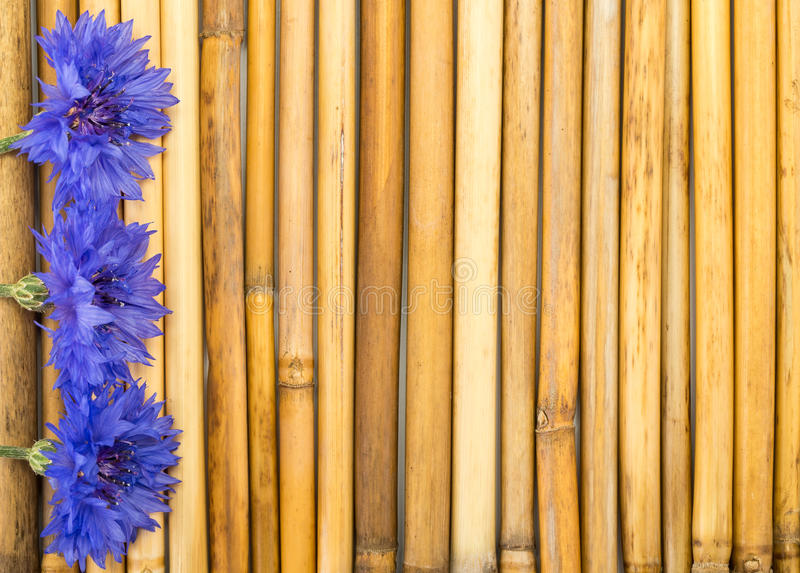 Bambu med blåklinter royaltyfria bilder
