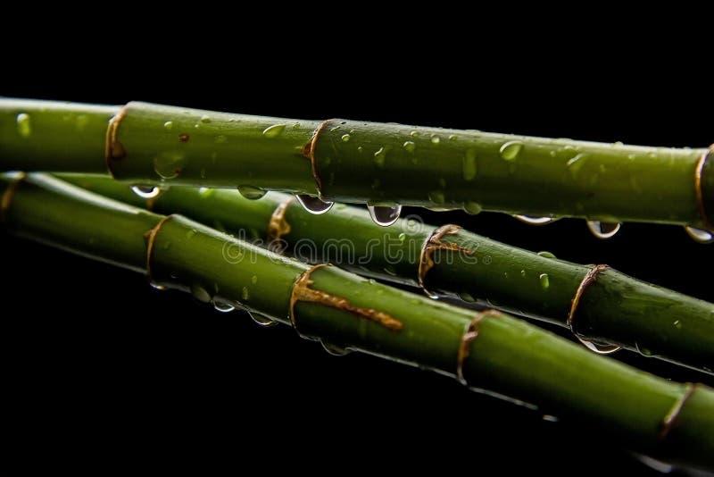 Bambu med droppar arkivfoton