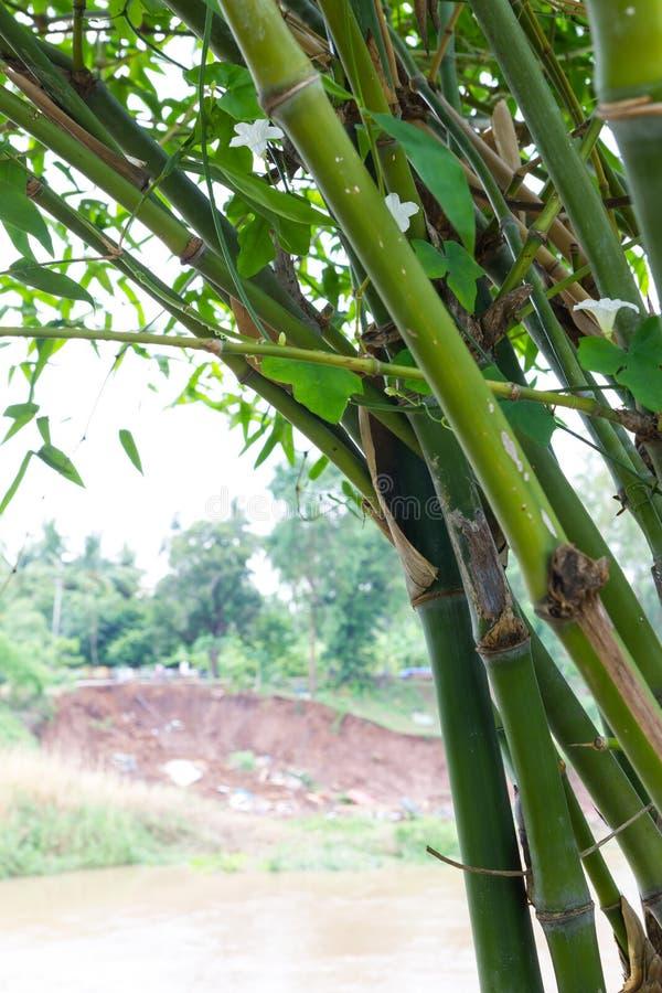 Bambu med jordskredet arkivfoton