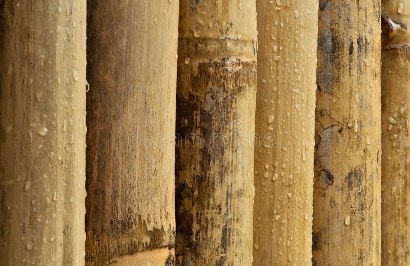 Bambu Molhado Imagens de Stock